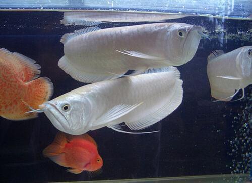 适合家养的观赏鱼有哪些