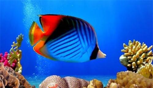 热带鱼怎么养_水温多少合适_热带鱼喜欢吃什么