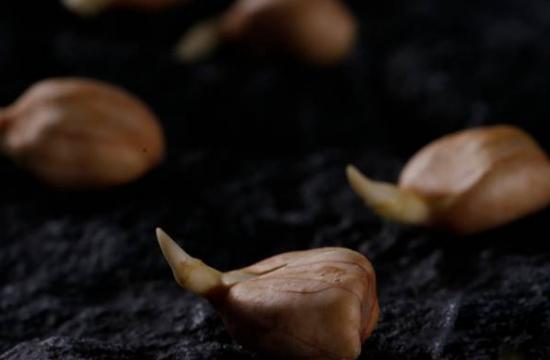 花生发芽后还能吃吗-发芽花生的营养价值