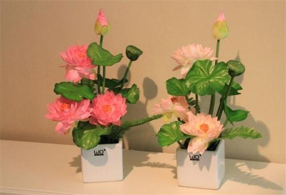 莲花的象征意义-莲花的风水作用