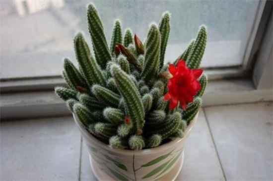 哪些花在冬天开放