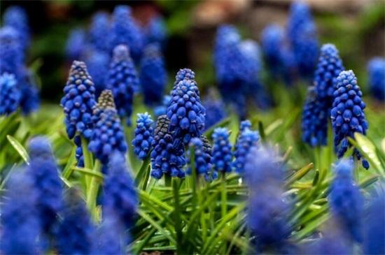 哪些花在春天开放