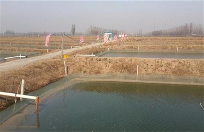 泥鳅池塘养殖之池塘的搭建注意事项